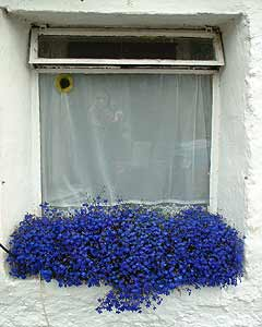 A window with flowers in Corran